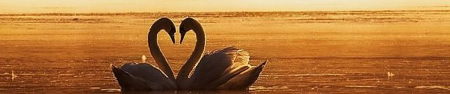 cropped-green-swans.jpg