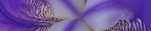 cropped-iris.jpg