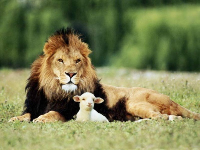 And_the_Lion_shall_lie_down_with_the_Lamb.jpg